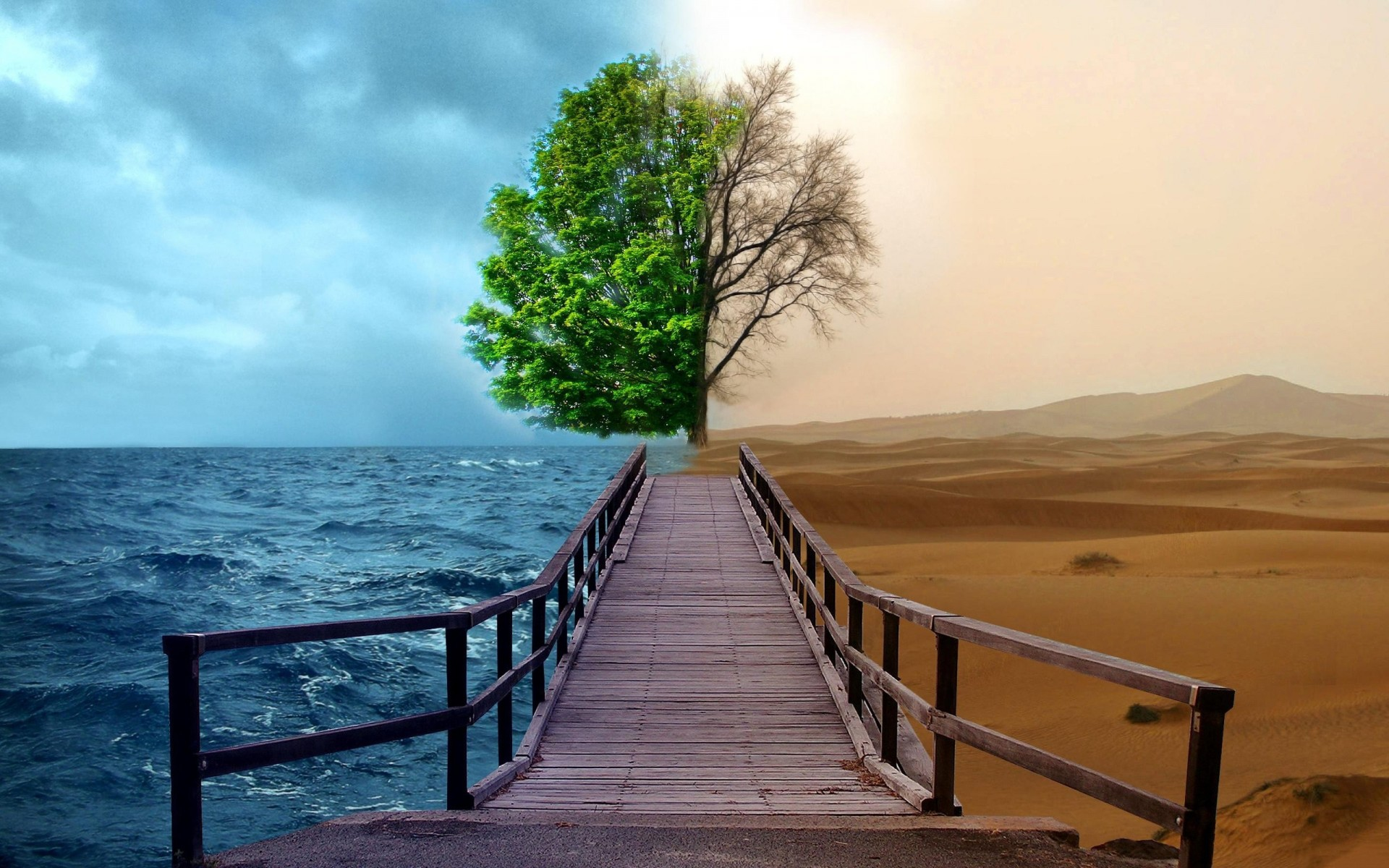 path sea tree desert water