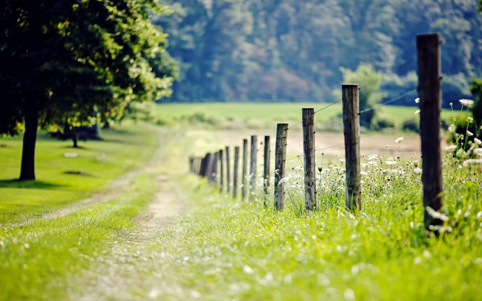 nature fence fencing meadow grass green tree foliage leaves flower flowers trees day path blur background wallpaper widescreen full screen hd wallpapers