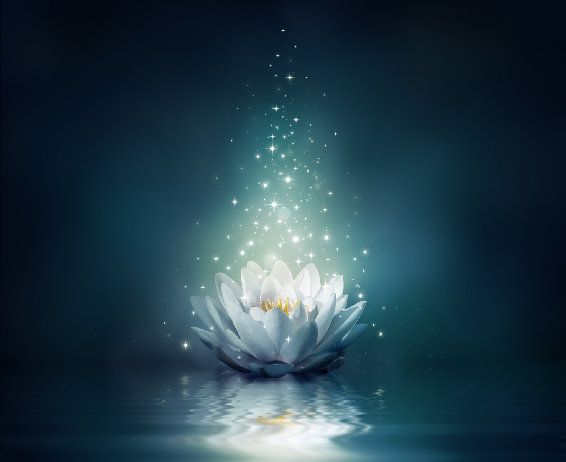 water lily flower bloom water sparkle lotus lights